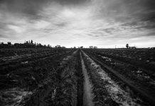 dark field