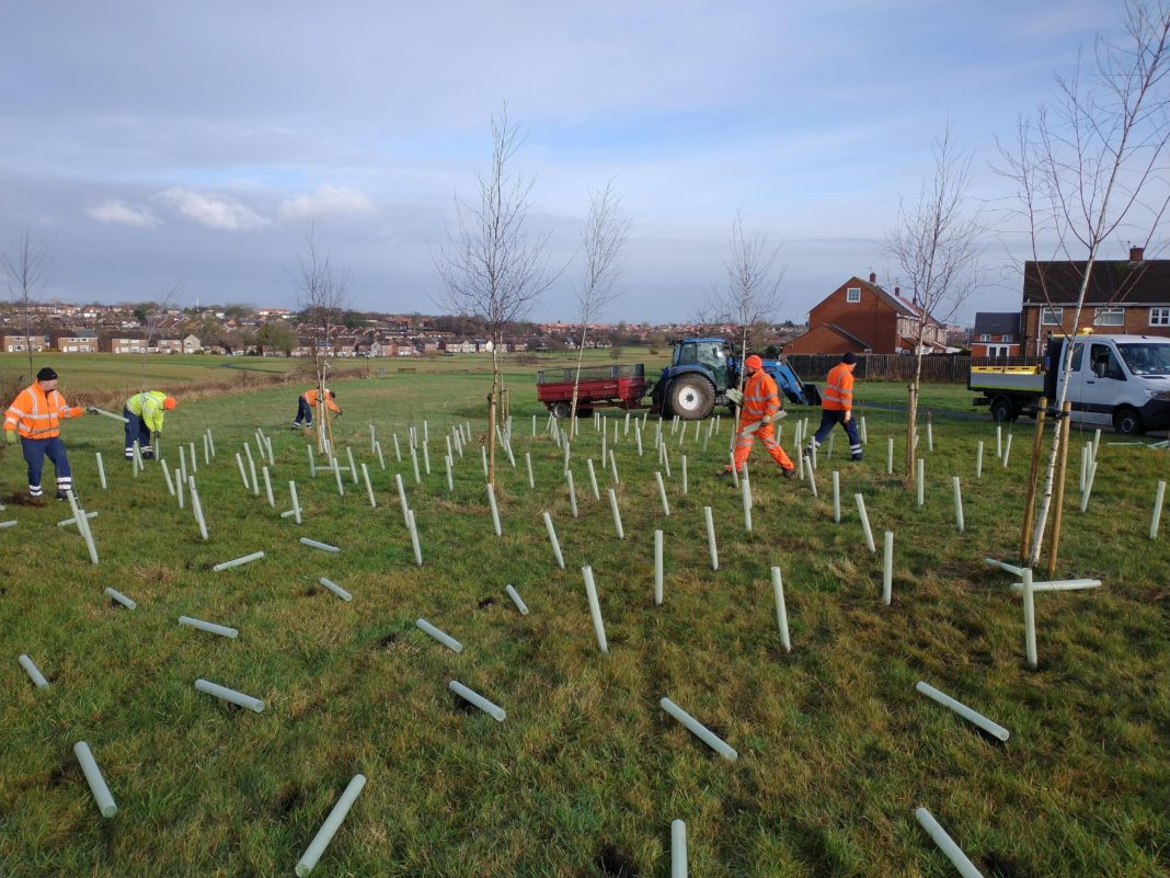 Additional 2,000 Trees Being Planted Across Sunderland